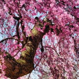 Mike Savad - Flower - Sakura - Finally it