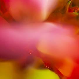 Omaste Witkowski - Flower Sprites