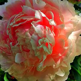 Srinivasan Venkatarajan - Flower
