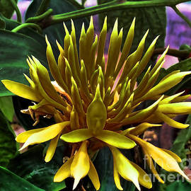 Luther Fine Art - Flower - Sultry Dahlia - Luther Fine Art