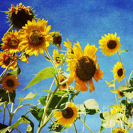Luther   Fine Art - Flower -Sunflower Surprise