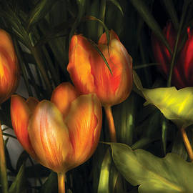 Mike Savad - Flower - Tulip -  Orange Irene and Red