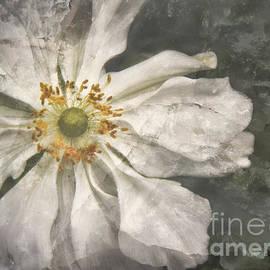 Olga Zamora - Flowerburst