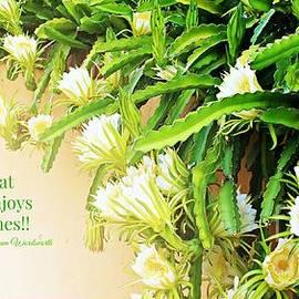 Clare Bevan - Flowering Beauty