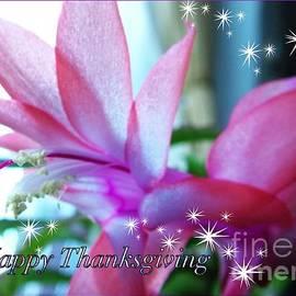 Joan-Violet Stretch - Flowering Succulent Thanksgiving