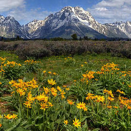 Ken Smith - Flowers at Mt Moran