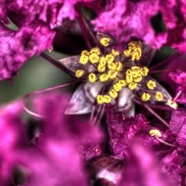 John Straton - Flowers at Swan Lake Park