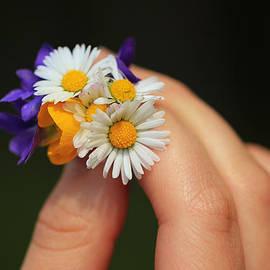 Rachel Cohen - Flowers for You 2
