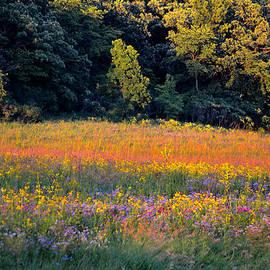 Deb Halloran - Flowers in the Meadow