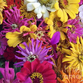 Miriam Danar - Flowers of Every Hue - Gerbera Daisies and More