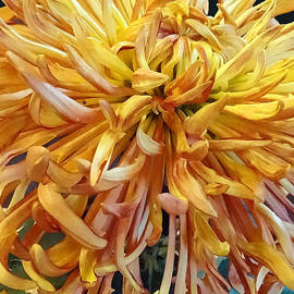Susan Savad - Flowers - Quill Mum Judith Baker