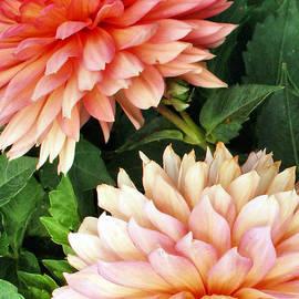 Tom Druin - Flowers...warm Breeze
