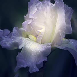 Julie Palencia - Flowing Iris in White
