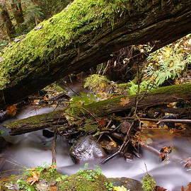 Jeff Swan - Flowing Under A Log