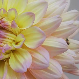 Teri  Kimbro - Fly on a Flower