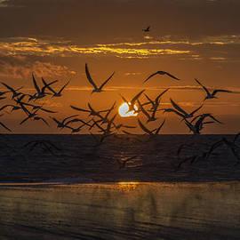 Island Sunrise and Sunsets Pieter Jordaan - Flying Skimmer Sunrise