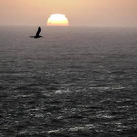 David Kehrli - Flying to the Sun