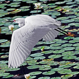 Stuart Harrison - Flying With Monet