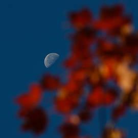 Georgia Mizuleva - Focused on the Autumn Moon