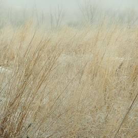 Tim Good - Fog-Frost