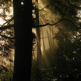 Jeff  Swan - Fog Lingering In Sunlight