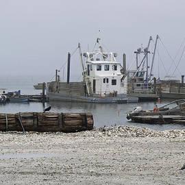 Pamela Patch - Foggy Harbor