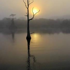 Myrna Bradshaw - Foggy Morning Sunrise