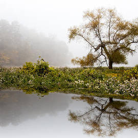 Debra and Dave Vanderlaan - Foggy Reflections Landscape