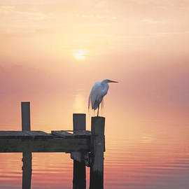 Benanne Stiens - Foggy Sunset on Egret