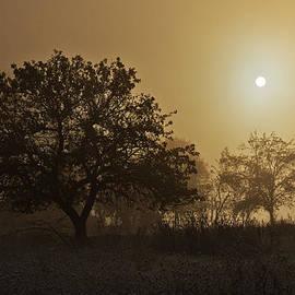 Mircea Costina Photography - Foggy sunshine
