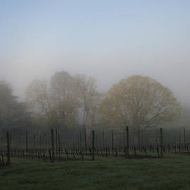 Jean Noren - Foggy Vineyard Morning