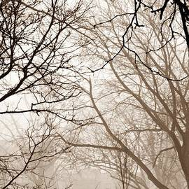 Sarah Loft - Foggy Winter Afternoon in Sepia