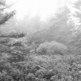 Michael Ver Sprill - Foliage Fog Panorama BW