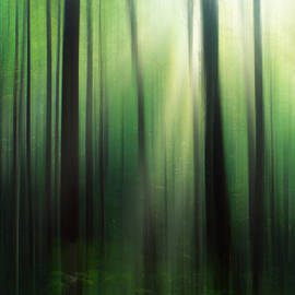 Darren Fisher - Forest Abstract