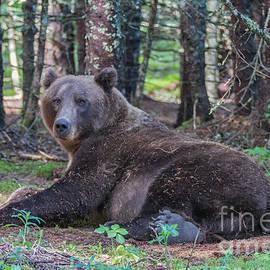 Chris Scroggins - Forest Bear