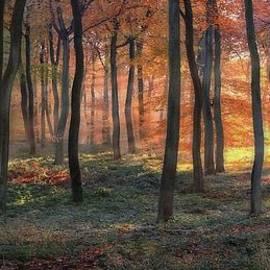 Ceri Jones - Forest Dawn