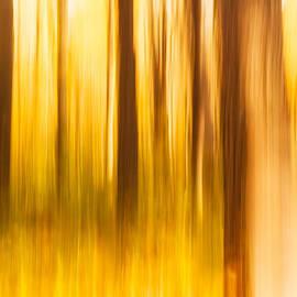 Lindley Johnson - Forest Dream
