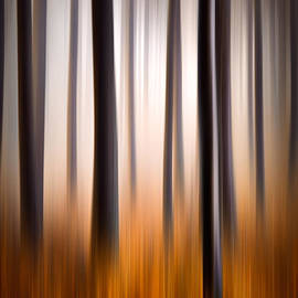 Dave Allen - Forest Essence Abstract Autumn Landscape