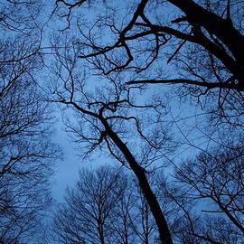 Jeff Heimlich - Forest Fractal