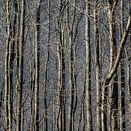 Alexander Senin - Forest Macrame