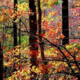 Karen Wiles - COLOR the FOREST