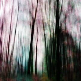 Randi Grace Nilsberg - Forest of Imagination