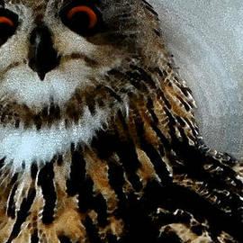 Colette V Hera  Guggenheim  - Forest owl