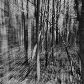 Forest Time B.W