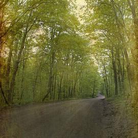Nina Stavlund - Forest Tranquility...