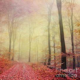 Iris Lehnhardt - Forest Walk