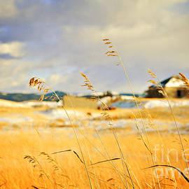 Theresa Tahara - Forgotten Farmhouse