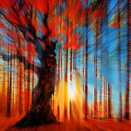 Tony Rubino - Forrest And Light