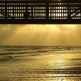 Jennifer White - Fort Myers Golden Sunset