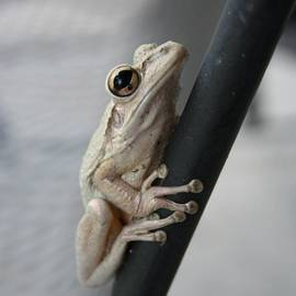Reno Manne - Found This Beautiful Little Frog On My